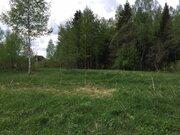 Лесной массив 27 Га с вековыми елями, соснами и березами в деревне - Фото 3