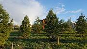 Лесной участок с соснами на Новорижском шоссе в 29 км от МКАД, Купить земельный участок Петровское (Ивановский с/о), Истринский район, ID объекта - 201577749 - Фото 6