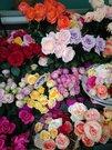 Сеть салонов цветов, Готовый бизнес в Москве, ID объекта - 100066388 - Фото 15
