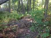 Участок с лесными деревьями 6 соток в с. Талеж - Фото 2
