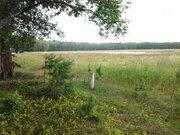 Продам 20 га в д. Покров, Жуковский район, 90 км от МКАД - Фото 5