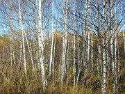 Участок 14 сот на лесной поляне, Таширово, ул. Лесная - Фото 4