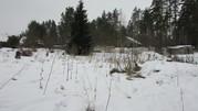 Земельный участок в окружении соснового бора - Фото 5