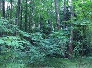 Лесной участок на уютном поселке на берегу Москва-реки - Фото 1