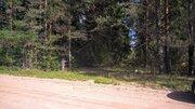 Шикарный земельный участок на опушке леса под строительство - Фото 4