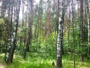 Лесной участок 6 соток дер. Копнино ИЖС - Фото 4