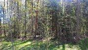 Участок 15 соток с лесными деревьями. Дарна - Фото 2