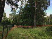 Участок 6 сот с вековыми соснами в Расторгуево с коммуникациями - Фото 2