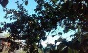 Продам дачу, с зимним проживанием, Курган, Энергетики, СНТ Радуга, Дачи в Кургане, ID объекта - 502362023 - Фото 2
