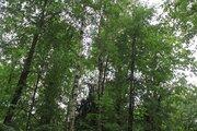 Лесной участок в стародачном поселке на Рублевке - Фото 5
