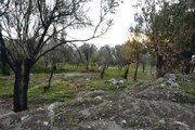 Земельный участок в Италии 2,61 га - Фото 5