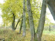 Киевское ш. 110 км от МКАД, Афанасово, Участок 18 сот. - Фото 5