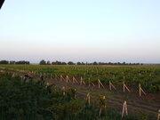Продаю виноградники общей площадью 156 га у моря - Фото 3