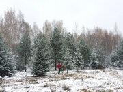 Участок 15 соток в д. Горки - Фото 3