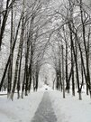 Трехкомнатная квартира в Чкаловском пешком от станций - Фото 5