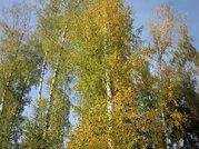 Красивый лесной участок 12 соток, Минское шоссе, Зелёная роща-1 - Фото 3