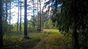 Шикарный земельный участок на опушке леса под строительство - Фото 2