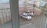 Продается квартира г.Махачкала, ул. Бейбулатова, Купить квартиру в Махачкале по недорогой цене, ID объекта - 323399668 - Фото 11