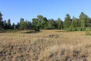 Участок на первой линии Чудского озера - Фото 3