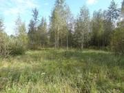 Участок 12 соток в д. Кировское - Фото 3