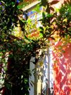 800 000 Руб., 1/2 часть 2этажного кирпичного дома, Продажа домов и коттеджей Сухум, Абхазия, ID объекта - 501198556 - Фото 13