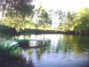 Зем. участок 7.5 сот. в деревне с красивым названием Ягодня, Кашира. - Фото 1