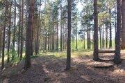 Участок в краю сосен и озер - Фото 5