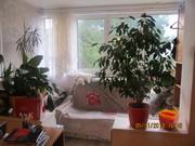 Продается двухкомнатная квартира в Ялте по улице Свердлова.
