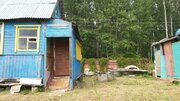 Участок в сосновом лесу с небольшим домиком 50 км от МКАД - Фото 4