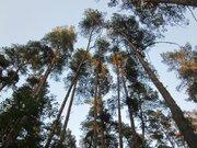 Великолетный сосновый участок в элитном поселке - Фото 3