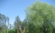 Продается участок 50 соток в пгт Ильинский, Раменский район - Фото 5