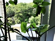 Продам 3-х комнатную квартиру в городе Анапа - Фото 5
