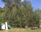 #649. Коттеджный поселок Медведица. Участки по 30 соток на 2-й линии - Фото 5