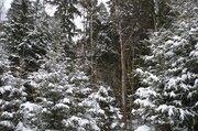 Лесные участки в кп Самар-1 - Фото 5