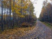 Продаю участок, 20 соток, Киевское ш, новая Москва, в лесу, 3,8 млн.р - Фото 3