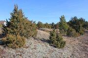 Участок рядом с сосновым лесом, Земельные участки в Гдовском районе, ID объекта - 201199227 - Фото 3