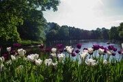 27 000 000 Руб., Уютная квартира с видом на парк, Купить квартиру в Санкт-Петербурге по недорогой цене, ID объекта - 324915906 - Фото 18