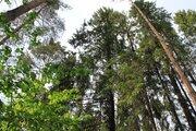Уникальный лесной участок у воды с панормными видами 10 км. от МКАД - Фото 4