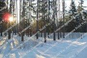 Лесной участок на Новорижском шоссе в Охр.посёлке