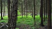 Эксклюзив 15 сот. с лесными деревьями, Ново-Александрово, 7 км от МКАД - Фото 2