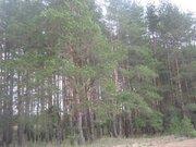 550 000 Руб., Продам 2-х эт дачу с печью среди хвойного леса и рек 15 мин от Рязани, Дачи Мурмино, Рязанский район, ID объекта - 502213954 - Фото 11