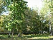 Участок 61 сот. с лесными деревьями 12 км. от МКАД п. Клязьма - Фото 3