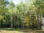 Участок 61 сот. с лесными деревьями 12 км. от МКАД п. Клязьма - Фото 4