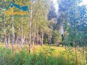 Единичный участок у леса в заповеднике Барсуки.