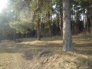 Сосновый участок ИЖС на Николиной горе, граничит с пансионатом. - Фото 4