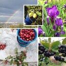 Предлагаем к продаже земельный участок 8,25 соток с домиком, Дачи в Красноярске, ID объекта - 502679239 - Фото 1