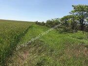 Земельный участок сельхоз назначения, 2,8 Га, с. Вилино - Фото 2