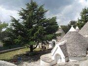 450 000 €, Продается усадьба с домами Трулли в Сельва - ди - Фазано, Купить дом в Италии, ID объекта - 504597592 - Фото 16