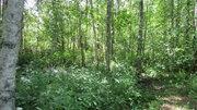 Продается земельный участок 25 сот в пос. Снетково вблизи 2-х озер - Фото 3