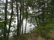 Шикарное место 3 га рекреационной земли (сосновый бор), на реке Волга - Фото 5